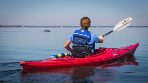 Cumberland Island Dungeness Kayak Tour-6333